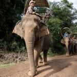 Caravane_e_le_phants_Laos-18-2