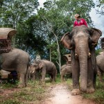 Caravane_e_le_phants_Laos-281-4