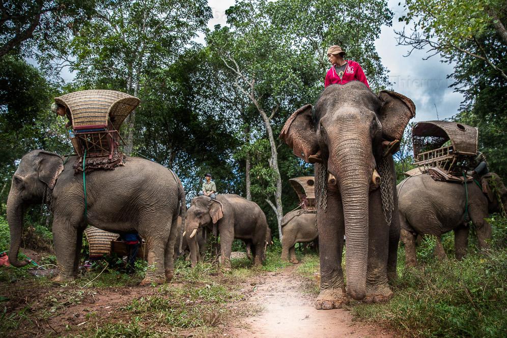 Caravane_e_le_phants_Laos-281-4