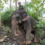 Caravane_e_le_phants_Laos-392-2
