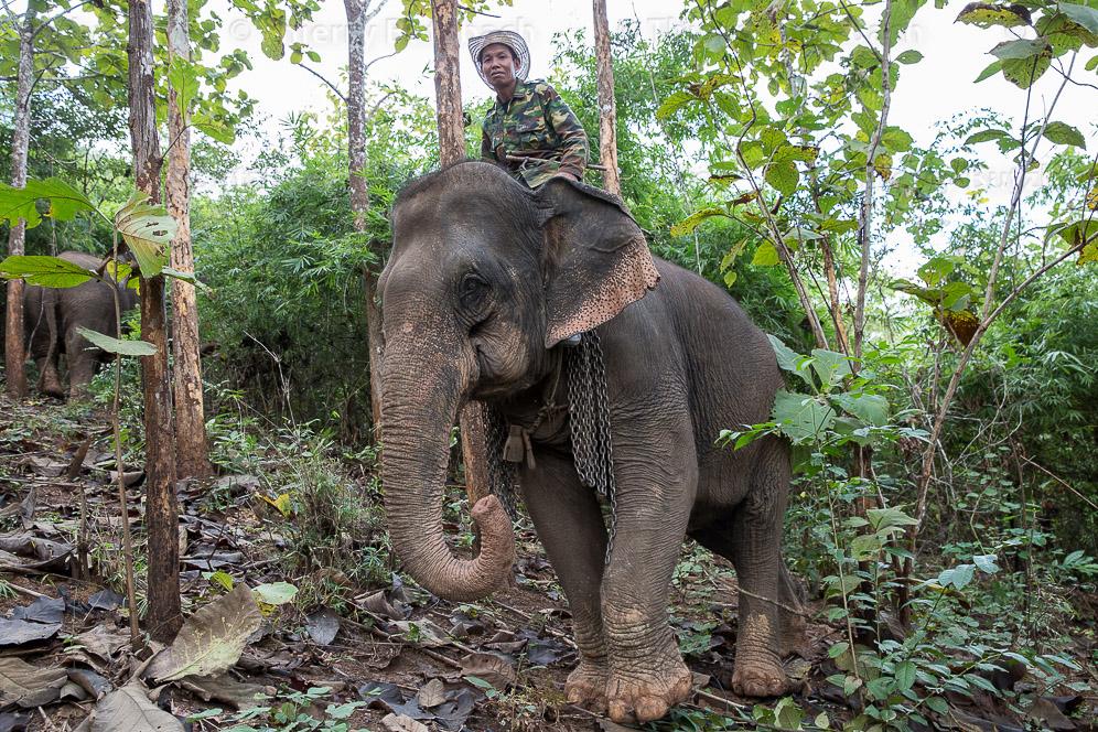 Caravane_e_le_phants_Laos-392-2