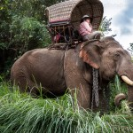 Caravane_e_le_phants_Laos-73-5